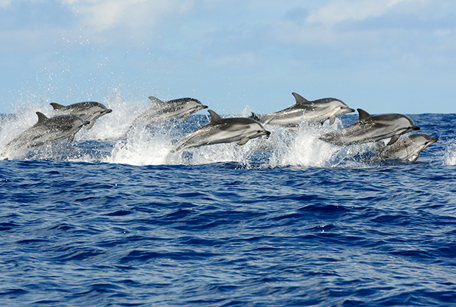 Walvissen en dolfijnen spotten