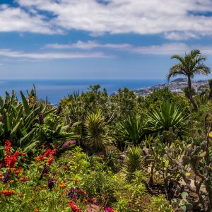 Funchal Madeira Mooie tuin