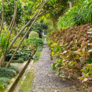 Funchal Madeira Wandelen