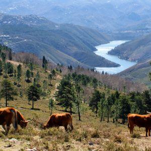 Pousada Rondreis Noord Midden Zuid Portugal   29