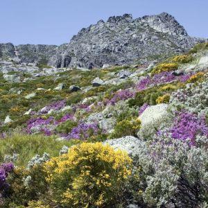 Rondreis Portugal Natuur en Cultuur 18