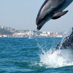 Rondreis Portugal Natuur en Cultuur 33