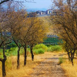 Rondreis Portugal Natuur en Cultuur 43