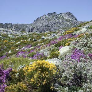 Serra da Estrela bloemen