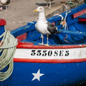 Vissersboot Setubal Portugal