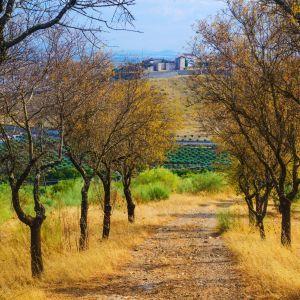 Landschap Elvas Alentejo Portugal