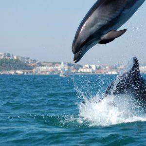 Dolfijnen Sado rivier Setubal Portugal