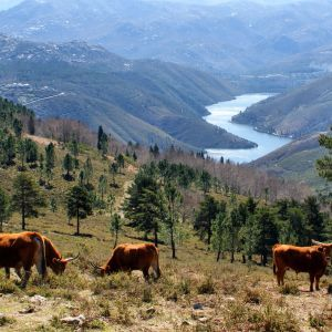 Peneda-Gerês Nationaal Park