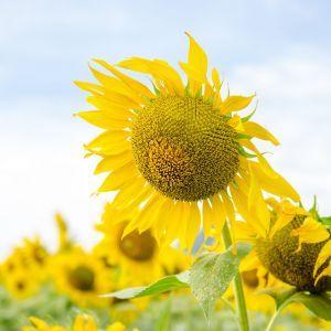 Alentejo Rondreizen bloemen